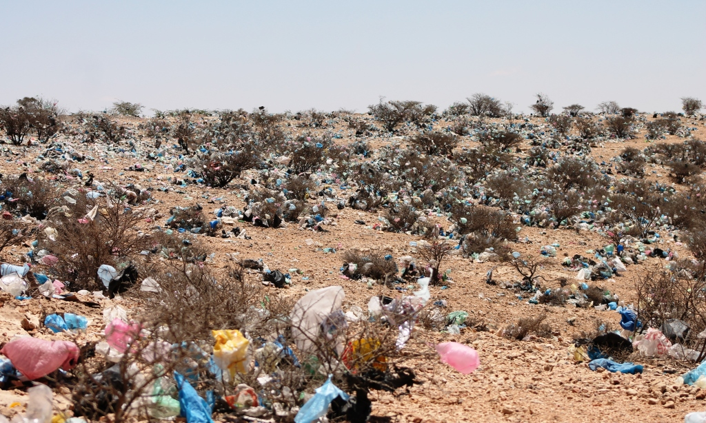 Plastic bags become entangled in bushes and many are eaten by livestock