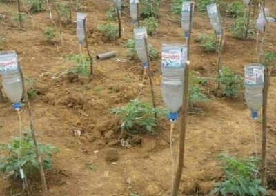 Repurposed plastic bottles for irrigation, Yaoundé, Cameroon (Franklin Nchanji)