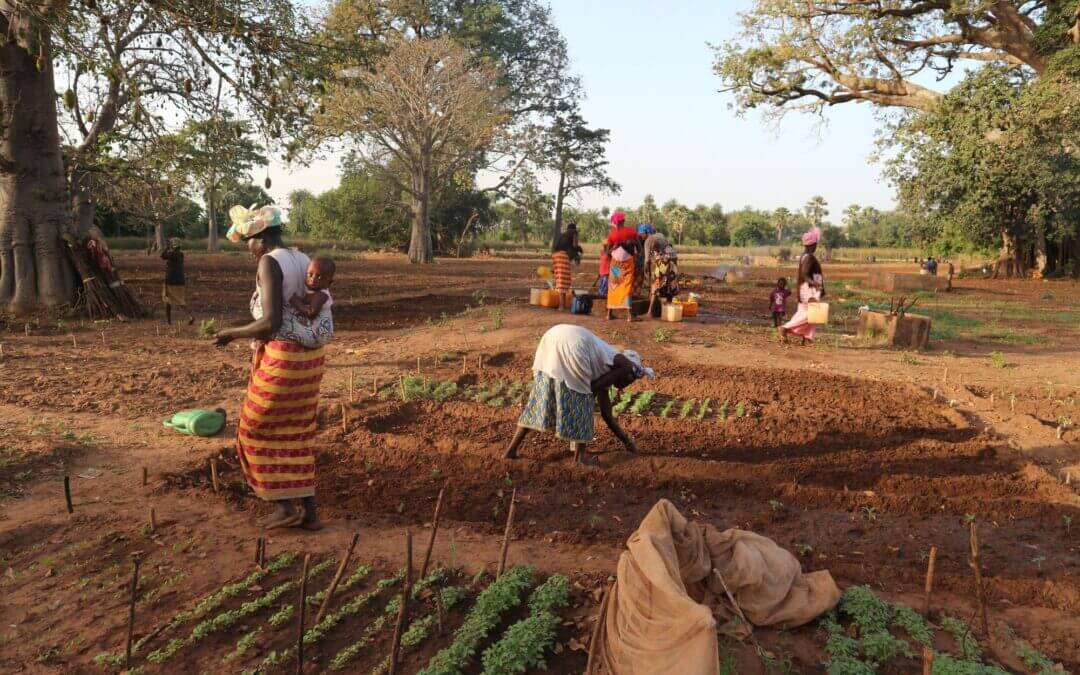 WasteAid awarded EU funding for climate resilience in The Gambia