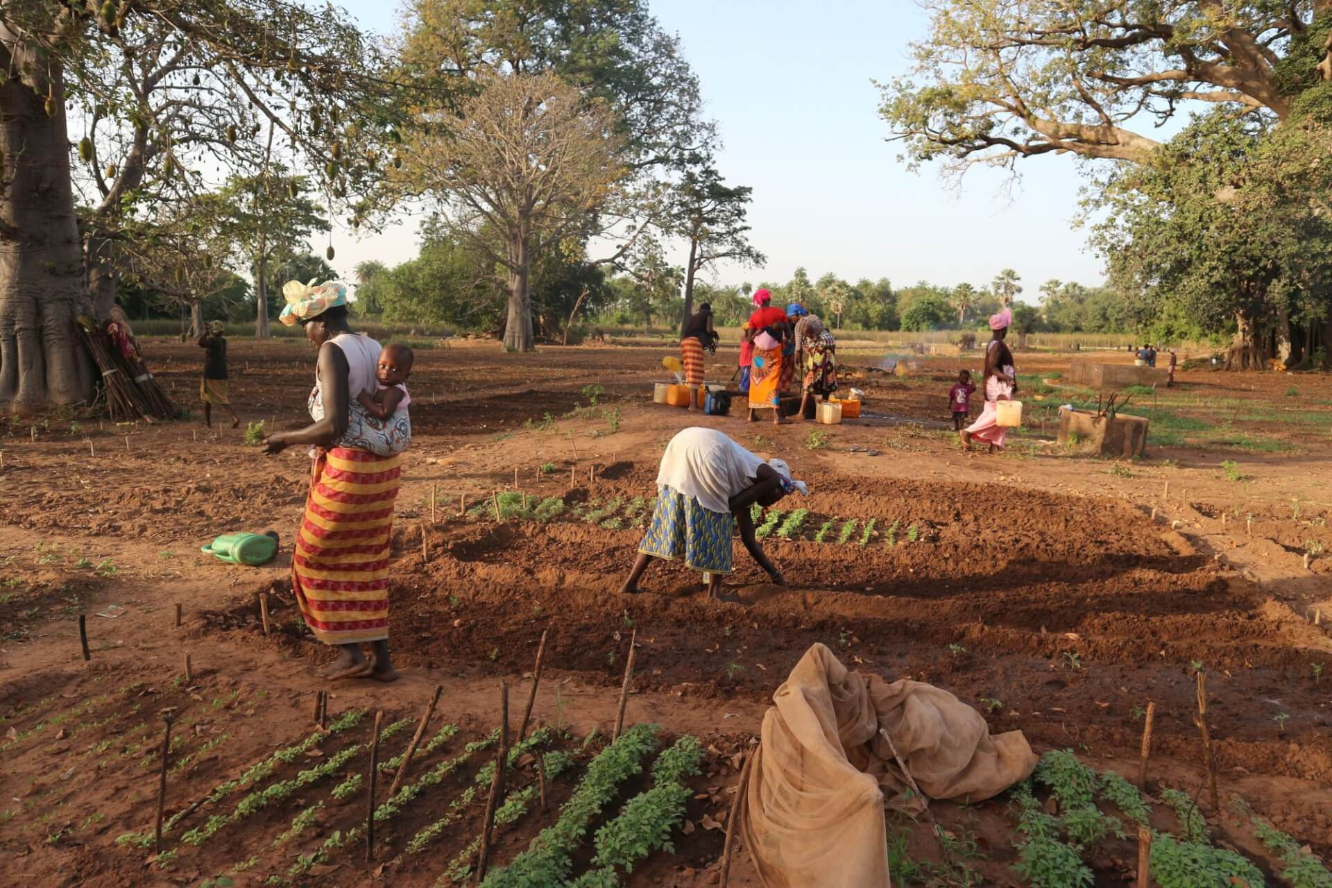 WasteAid_Womens gardens_The Gambia